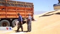 کشت و کاڵ له ههریمی کوردستان