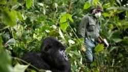 Au moins six rangers tués dans une attaque dans le parc des Virunga