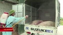 Việt Nam tiêu hủy 2,5 triệu con lợn