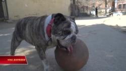 Mỹ: Bùng nổ xu hướng nhận nuôi thú cưng bị bỏ rơi thời Covid