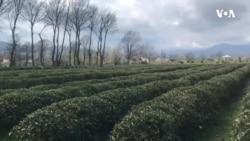 Azərbaycanda ilk çay muzeyi