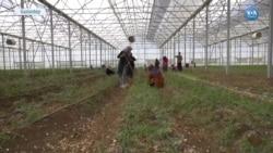 Türk ve Suriyeli Kadınlar Tarımla Avrupa'ya Ulaşıyor