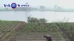 Manchetes Africanas 12 Novembro 2013