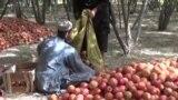 د کندهار کروندګر وايي پرله پسې د پاکستان پولې د تړل کېدو امله یې د مېوې ګټه ور فصلونه تباه کېږي