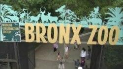 U Zoološkom vrtu Bronxa, potvrde o državljanstvu djeci iz 25 zemalja