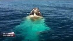 Gledanje kitova nova atrakcija na Manhattanu