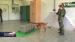 Njemačka: Program obuke pasa za borbu protiv koronavirusa