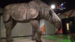 Միլիոնավոր տարիների ընթացքում կենդանատեսակները ենթարկվել են արմատական փոփոխությունների