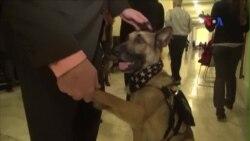 Nghị sĩ, giới hoạt động kêu gọi đưa chó quân đội về nhà sau khi phục vụ