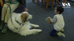 Навіщо діти читають книжки собакам в бібліотеках Лос-Анджелеса? Відео