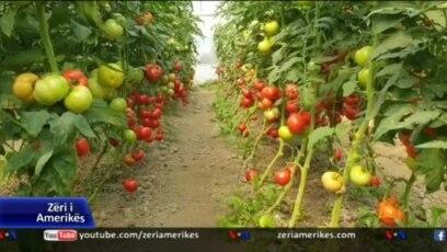 Billedresultat for Fermerët shqiptarë në vështirësi; nuk shiten prodhimet