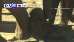 San Dieqo zooparkının yeni üzvü ~ 100 yaşlı sürücü avtoqəza törətdi