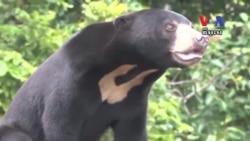 Cambodia Makes Progress Curbing Bear Trade