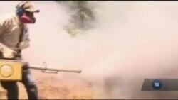 Війна з комарами у США: Флорида стала передовою фронту. Відео