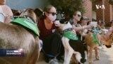 Kako je pas preokrenuo život advokatici i pomogao mnogim psima i ljudima