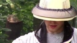 Amateur Beekeepers Encourage Spread of Apiaries