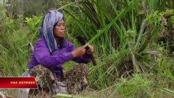 Những người cứu rừng ở Campuchia