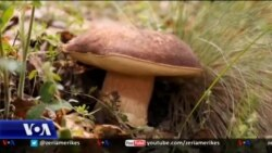 Ruajtja dhe promovimi i traditës shqiptare të ushqimit