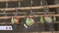 Opasno se smanjuje broj insekata na Zemlji