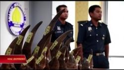 Malaysia bắt giữ 18 sừng tê giác, trị giá 3 triệu đôla