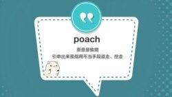 学个词 - poach