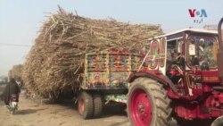 گنے کے کاشت کار سڑکوں کی خاک چھاننے پر مجبور