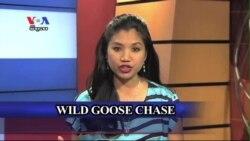 Wild Goose Chase រកអ្វីមួយដែលគ្មានសង្ឃឹមថា នឹងរកឃើញ