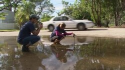 Miami Citizens Become Scientists to Study Rising Seas