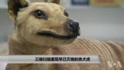 三维扫描重现早已灭绝的类犬虎