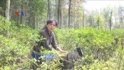 Studi Banding Kehutanan Indonesia-Amerika