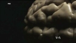 New TV Program Explores the Human Brain