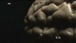 New TV Program Explores the Human Brain