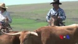 Cowboys americanos - A vida dum casal do Kansas