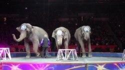 US Last Circus Elephants