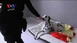 یک هتل پنج ستاره برای حیوانات خانگی در استرالیا