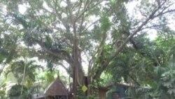 Mujer en Florida vive en un árbol