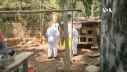 印度喀拉拉邦爆發禽流感