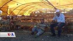 Çîroka Dijwar ya Ajalfiroşên Kurd li Bazara Qurbanê ya Stenbolê