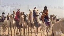 La cure salée célèbre les éleveurs du Niger (vidéo)