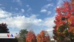 Hin Dîmenên ji Payîza Virginia