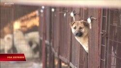 Tổng thống Hàn Quốc: Có thể cần phải cấm ăn thịt chó