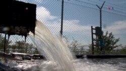 TEC: Algas trabajan contra contaminación