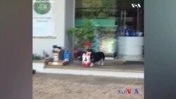 اپنی شاپنگ خود کرنے والا کتا