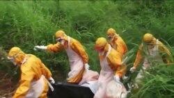 Ebola Vaccine Successful