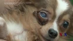 走进美国:揭秘宠物滥育场-美国动物庇护所(下)