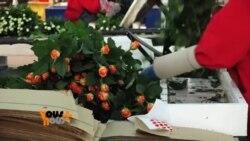 Vous et Nous : Des fleurs kényanes sur le marche americain