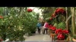 ვაშინგტონის ბოტანიკური ბაღი საახალწლოდაა მორთული