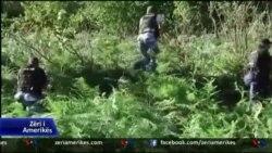 Bimët narkotike në qarkun e Shkodrës
