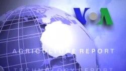 Anh ngữ đặc biệt: Mali Education (VOA)