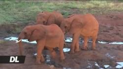 Shirika la save the elephant imetoa ripoti yake inayotuhumu China kuendeleza biashara haramu